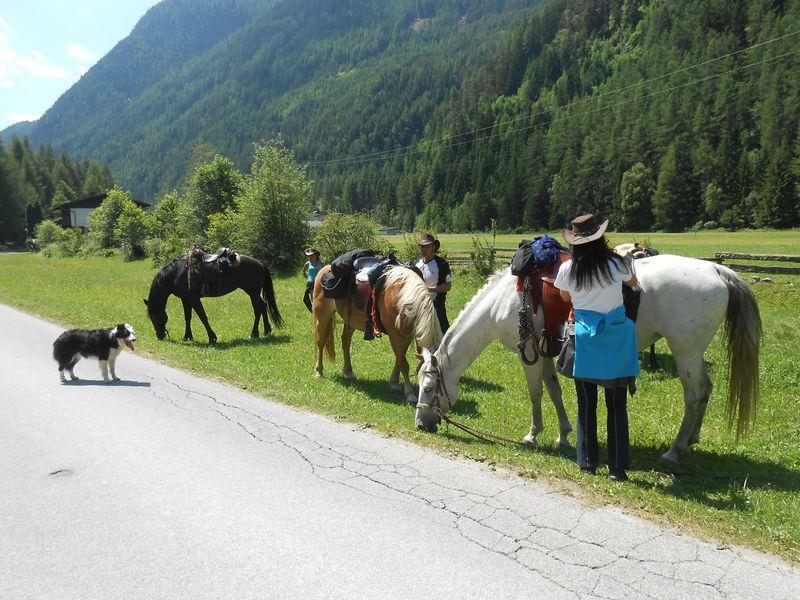 Trail riding stables Harmony  - Stuibenfall
