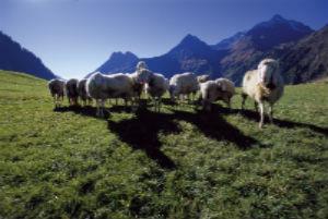 Schaferfest in Östen